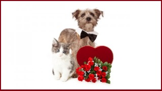 Valentines Day Can Be Deadly For Pets!